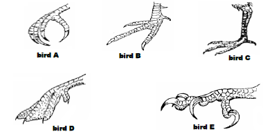 the figure below shows feet of various birds  study the diagram and answer  the questions that follow  (i) name the type of evolution represented by  the