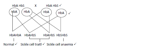 Sickle cell anaemia is a hereditary disease due to a recessive gene
