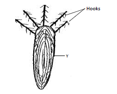 Name the fins that prevent the following movements of fish