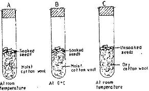 the diagram below represents a set up to investigate the conditions rh kenyaplex com grass seed germination diagram seed germination process diagram