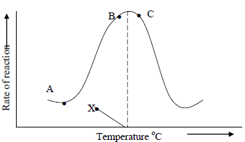 The Figure Shows The Effect Of Temperature On An Enzyme